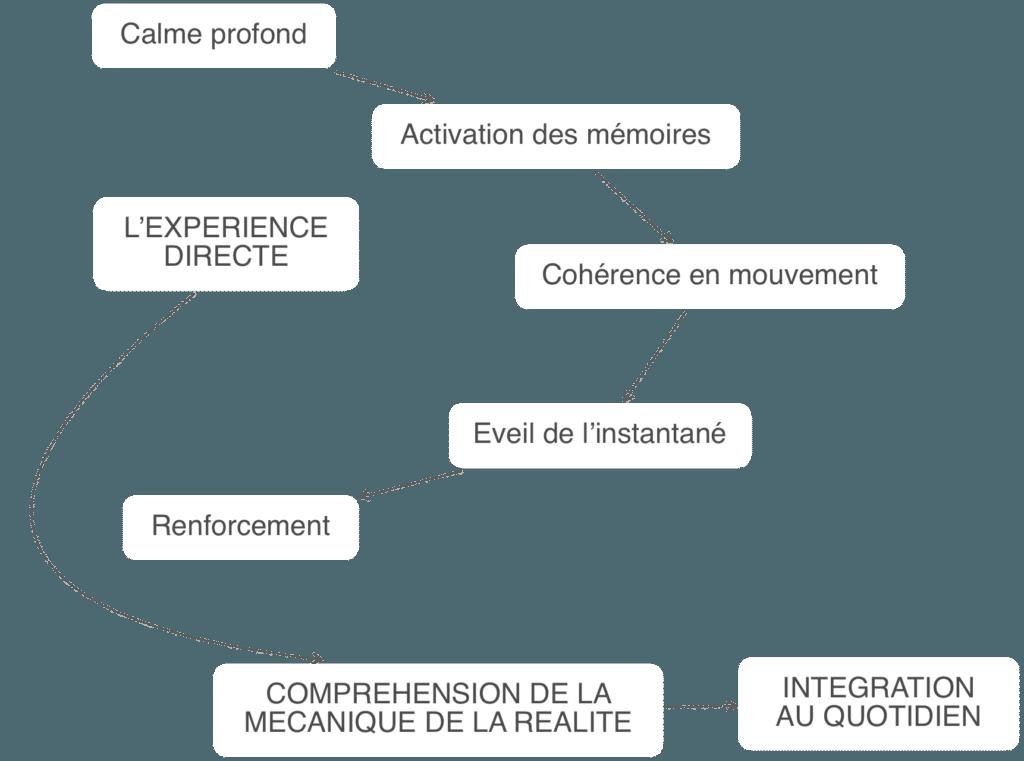 Programme Pro Tai Chi Armand Florea Bordeaux