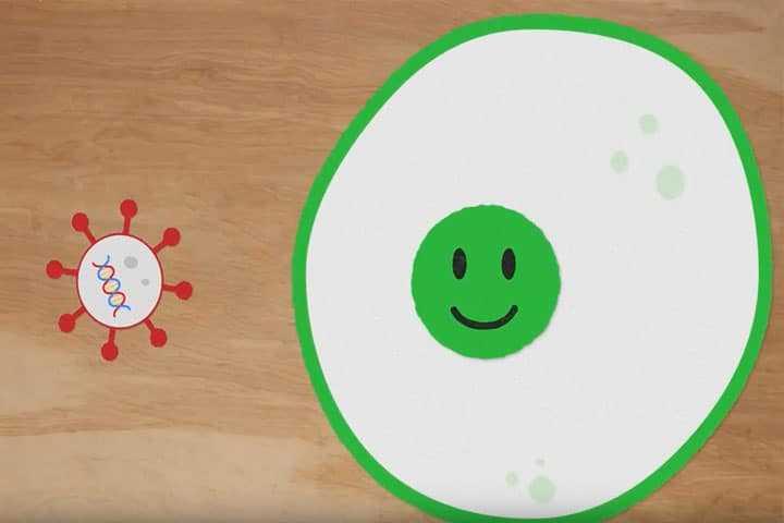 Comment voir les germes se propager ?